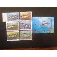 Азербайджан 1993 Рыбы полная серия