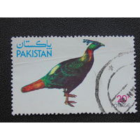 Пакистан. Птицы.