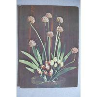 Шпинев А., Цветы; 1973, подписана.
