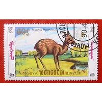 Монголия. Фауна. ( 1 марка ) 1990 года.