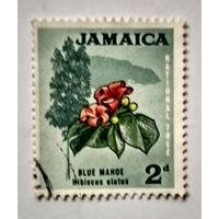 Ямайка.флора.цветы