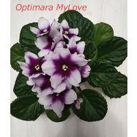 Фиалка Optimara MyLove - св. лист